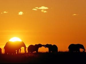 elephant00