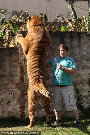 Brazil's Tiger Family
