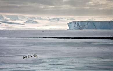 23A1504A00000578-2855812-Walk_the_line_A_family_of_penguins_dash_across_the_ice_near_Ross-18_1417444660647